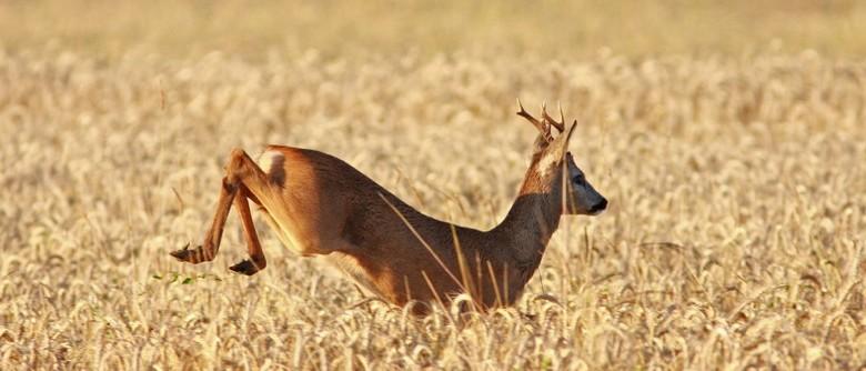 Jagdschein Franken - Natur