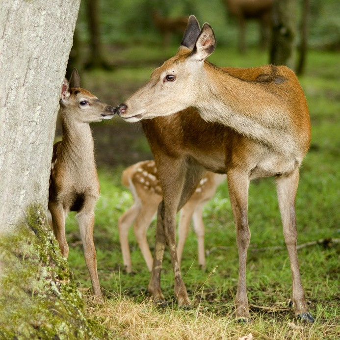 Jagdzentrum Oberfranken - Wild