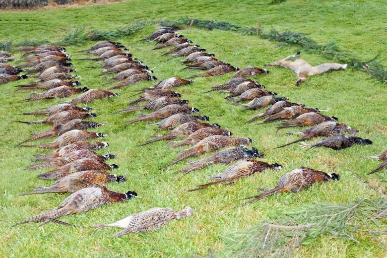 Jagdzentrum Oberfranken - Jagdschein schnell und günstig